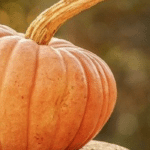 48 Pumpkin Recipes for the Fall